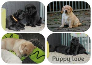 collage puppy love