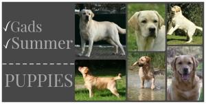 gads summer puppies