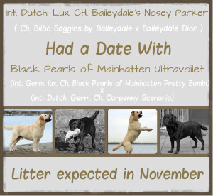 litter expected Hailey x Parker